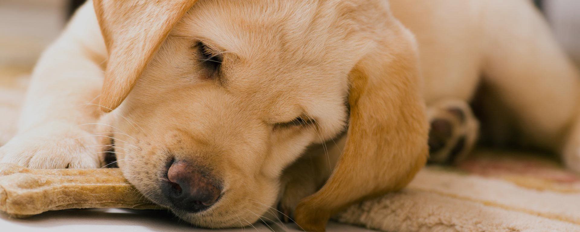 Flauschige Hundebetten