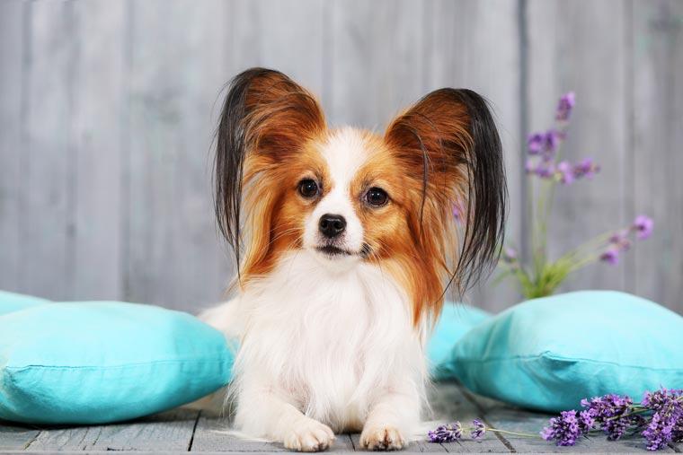 Zubehör für kleine Hunde