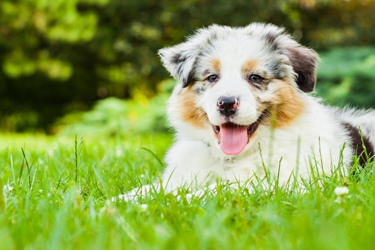 Hundezubehör von Axero