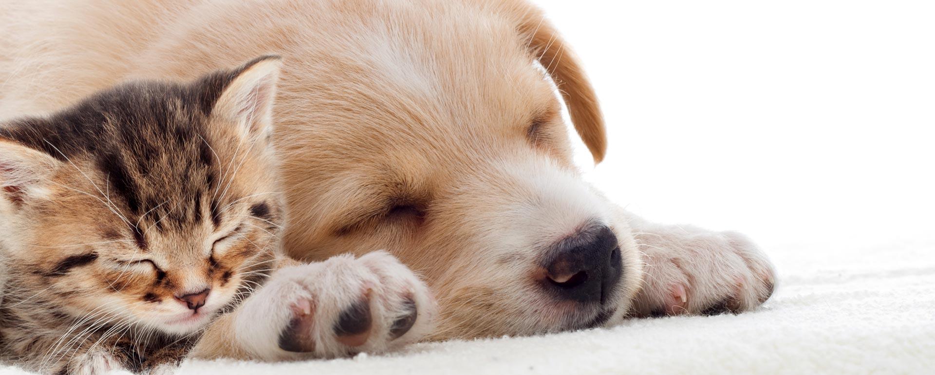 Hundebetten für Ihre Hunde